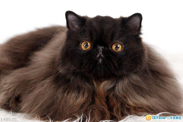 寵物攝影,寵物人像攝影,影樓寵物攝影,寵物家庭攝影,特價1180